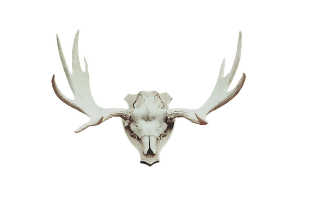 A hunting trophy is a great addition to your man shed